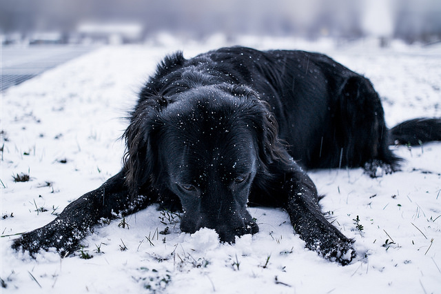winter-pet-friendly-cleaning-tips